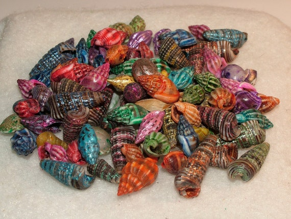 Genuine Small Dyed Seashells for crafting, beading