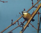 oil painting, nuthatch, 16x20 giclee print, by Anna Morton
