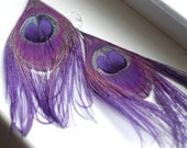 Mezmorize Purple Peacock Feather Earrings