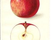 1912 Fruit Print - Eastman Apple - Vintage Home Kitchen Food Decor Plant Art Illustration Great for Framing 100 Years Old
