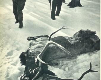 1940s Vintage Photograph - Elk Hunting - Wonderful 40s Vintage Book Art Photograph Great Vintage Print for Cottage or Cabin