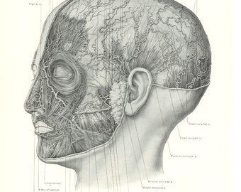1926 Human Anatomy Print - Arteries Nerves and Muscles of Face and Scalp - Vintage Antique Medical Anatomy Art Illustration Doctor Office