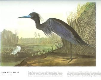 John James Audubon Bird Print - Little Blue Heron - Vintage Natural Science Home Decor Art Illustration Great for Framing