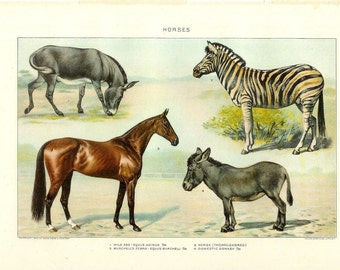 1903 Animal Print - Horses - Vintage Antique Home Decor Book Plate Art Illustration for Framing 100 Years Old