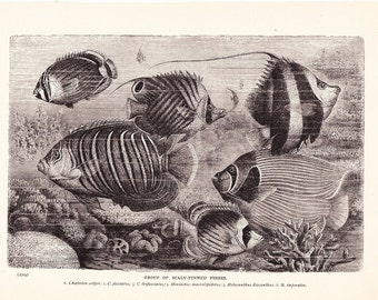 1901 Animal Print - Group of Fishes - Vintage Antique Book Plate for Natural Science or History Lover Great for Framing 100 Years Old