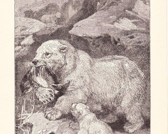 1904 Animal Print - Polar Bears - Vintage Antique Book Plate for Natural Science or History Lover Great for Framing 100 Years Old