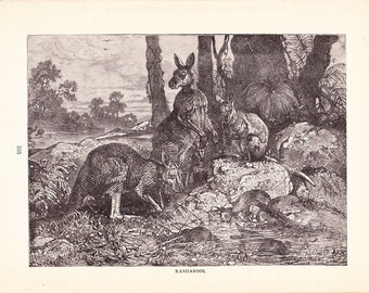 1880 Animal Print - Kangaroos - Vintage Antique Home Decor Art Illustration for Framing 100 Years Old