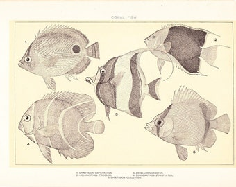 1903 Fish Print - Coral Fish - Vintage Antique Home Decor Book Plate Art Illustration for Framing 100 Years Old