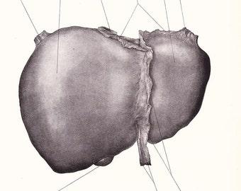 1926 Human Anatomy Print - Superior Surface of Liver - Vintage Antique Medical Anatomy Art Illustration for Doctor Hospital Office