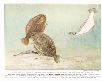 1939 Fish Print - Flounder - Vintage Antique Nature Science Animal Art Illustration Cabin Cottage Home Decor for Framing