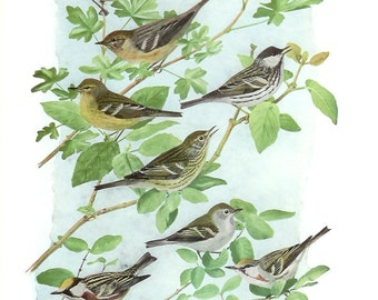 1936 Bird Print - Plates 95 & 96 - Warblers - Vintage Antique Art Illustration by Louis Agassiz Fuertes 75 Years Old