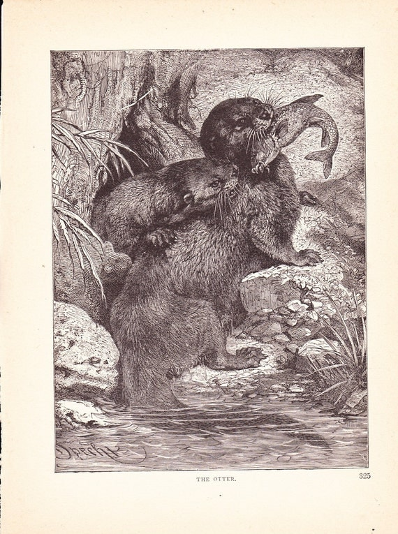 1880 Animal Print Otter Vintage Antique Home Decor By Holcroft