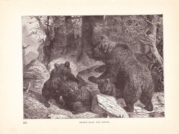 1880 Animal Print - Brown Bear and Cubs