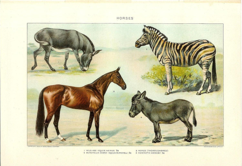 1903 animal print horses vintage antique home decor book