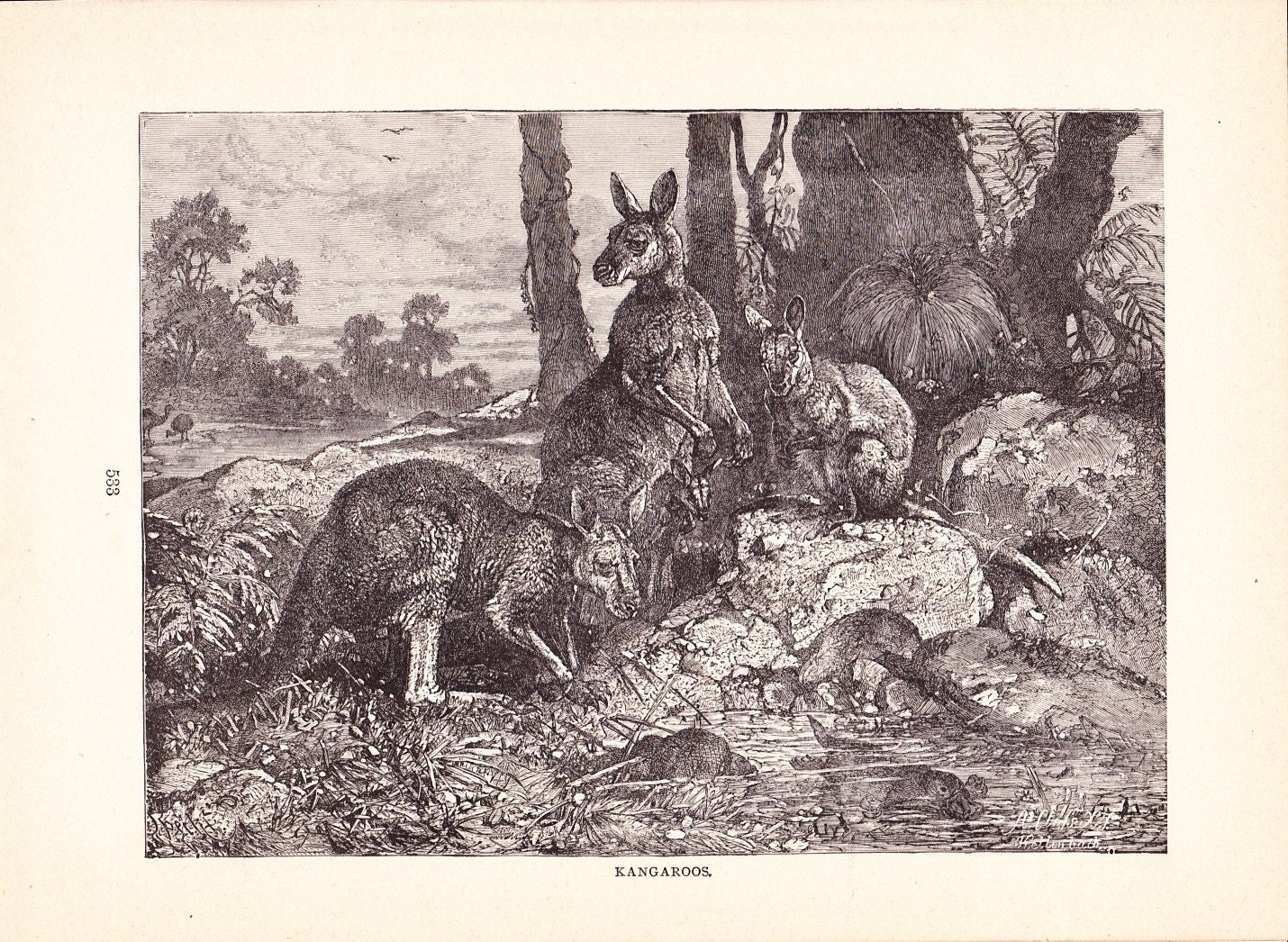1880 Animal Print Kangaroos Vintage Antique Home Decor Art