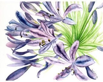 Original watercolor-Agapanthus
