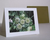 note cards- your choice of photographs