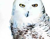 Bird Art, Snow Owl Painting, woodland watercolor painting, original artwork