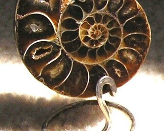 Polished Ammonite Fossil with coiled sterling silver stand