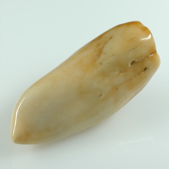 Fossil Alaskan WALRUS Tooth specimen 46mm natural Walrus Ivory - antique ivory color - 12.2 grams - No.2