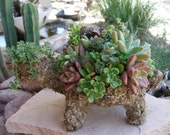 Succulent Plant Turtle Topiary, The Original Succulent Designs, Featured in Birds and Blooms