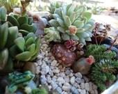 Succulent Mountain Stream Terrarium Centerpiece