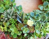 """SHIPS MAY 21, Succulent Wreath or Centerpiece, 16"""", As Seen in Birds & Blooms and Phoenix Magazines, The Original Succulent Designs"""