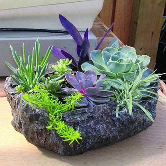 Succulent Garden Kit Rock Planter Includes Everything You Need to DIY