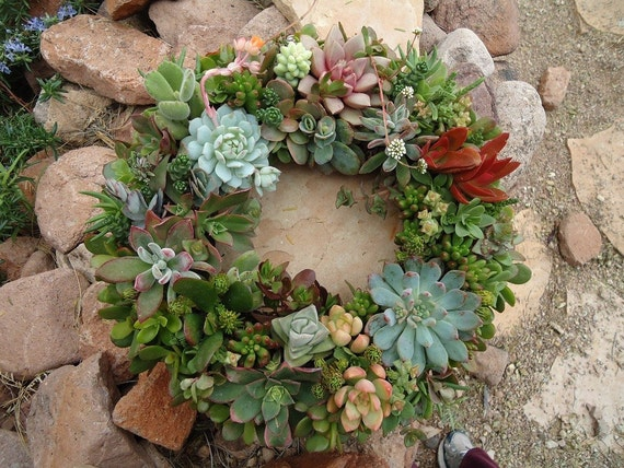 "Featured in Birds and Blooms and Phoenix Magazines, Etsy Featured Seller, 12"" Living Succulent Wreath or Centerpiece,"