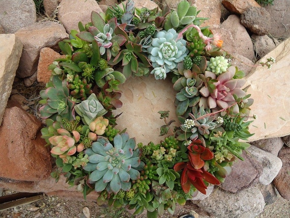 As Seen in Birds & Blooms and Phoenix Magazines The Original Succulent Designs Living Succulent Centerpiece/Wreath XL Choose Your COLORS