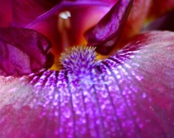 Purple Passion Fine Art Photograph