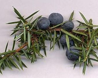 6 pack Juniper Berry Palm Votives