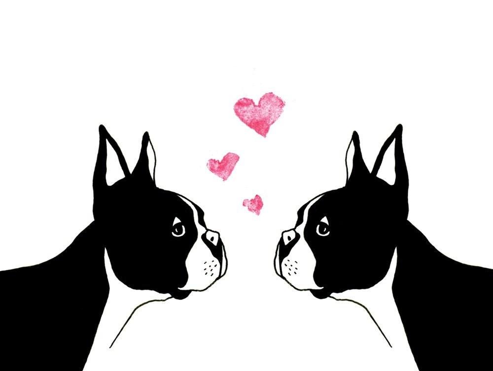 boston terrier valentine love greeting card