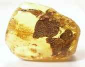 Nice piece of the raw Baltic amber with the vestiges of a plant fossil. (EA132)