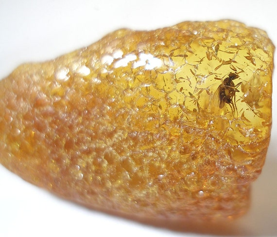 Inclusion (insect fossil) in the Baltic amber. (EM147)