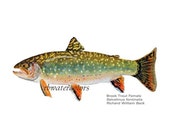 Sale Fish Brook Trout Female PRINT 8x10 fathers day man gift under 15 gift under 20