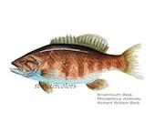 fish print watercolor painting Smallmouth Bass Fish PRINT 11x14 den decor man gift gift for man