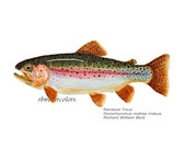 Reserved for MARIA NAY2 Fish Print Trout Cutthroat Brown Brook Set of 4 Art Fish Trout  8x10