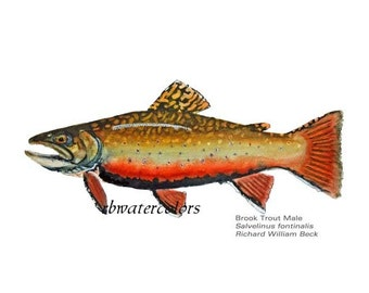 Fish PRINT art sale for him Male Brook Trout painting Fish Spawning illustration fish 11x14 fly fisherman fathers day den office study decor