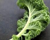 Organic Ragged Jack Kale Heirloom Vegetable Seeds