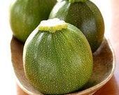 Organic Round Zucchini Squash Heirloom Vegetable Seeds