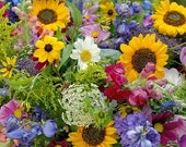 Organic Wildflower Cut Flower Mix Heirloom Seeds