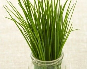 Organic Onion Chives Heirloom Herb Seeds