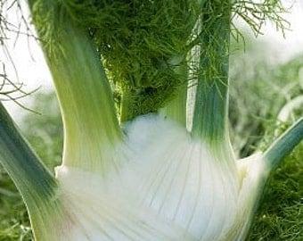 Organic Fennel Florence Heirloom Herb Seeds