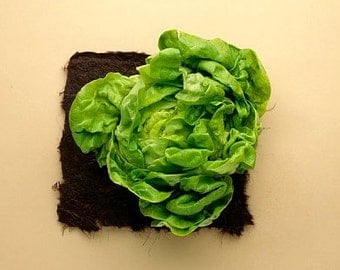 Organic Buttercrunch Head Lettuce Heirloom Vegetable Seeds