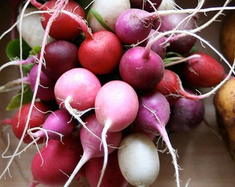 Organic Easter Egg Blend Radishes Heirloom Vegetable Seeds