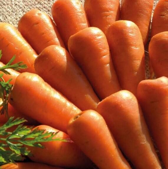 Organic Chanteney Carrot Red Cored Heirloom Vegetable Seeds