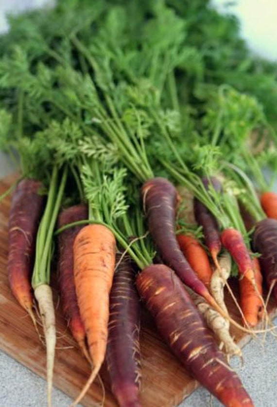 Organic Carrot Rainbow Blend Heirloom Vegetable Seeds