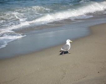 Shore Bird 8x10