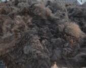 Alpaca Fleece from Toby for Cassie